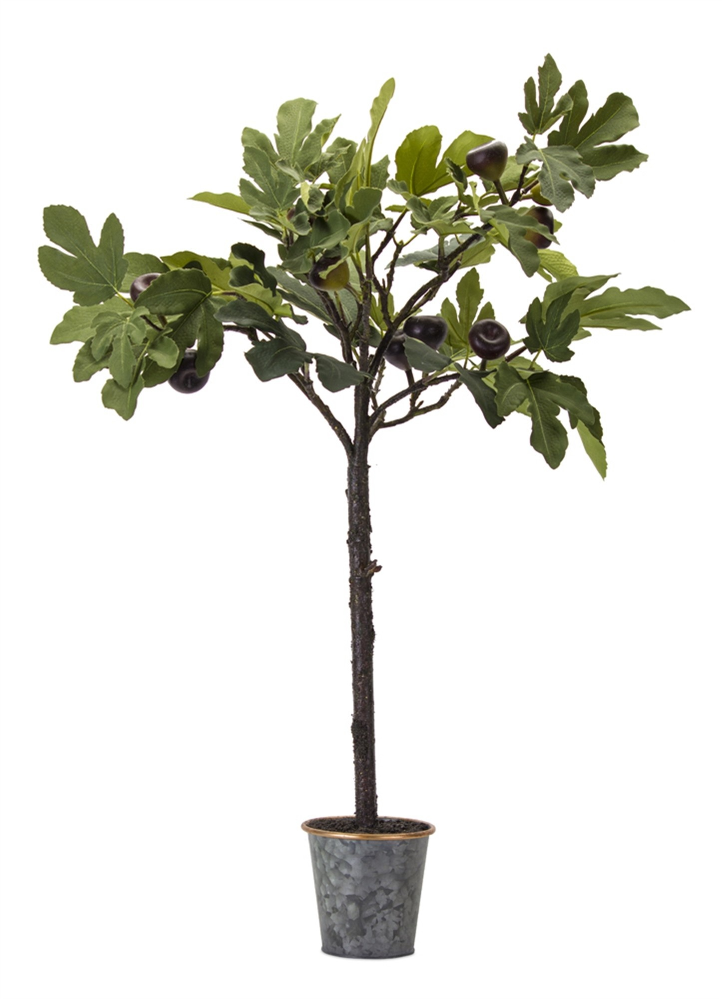 """35"""" Potted Fig Plant"""