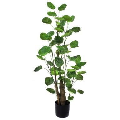 3-Ft. Potted Eucalyptus Tree
