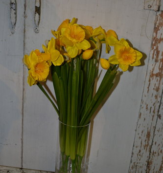 Daffodil Spray