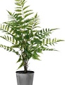 "23"" Fern in Metal Pot (3-Styles)"