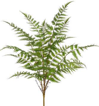 """30"""" Forest Fern Bush"""