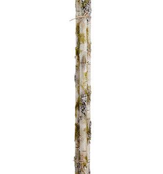 Mossy Birch Stick Bundle