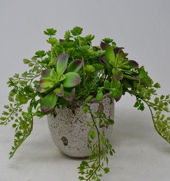 Custom Succulent Fern Pick In Distressed Pot