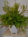 Custom Mixed Fern In Embossed Daisy Container