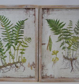 Whitewashed Wood Framed Fern Print (2-Styles)