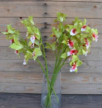 """25"""" Green Pink Cattleya Orchid"""