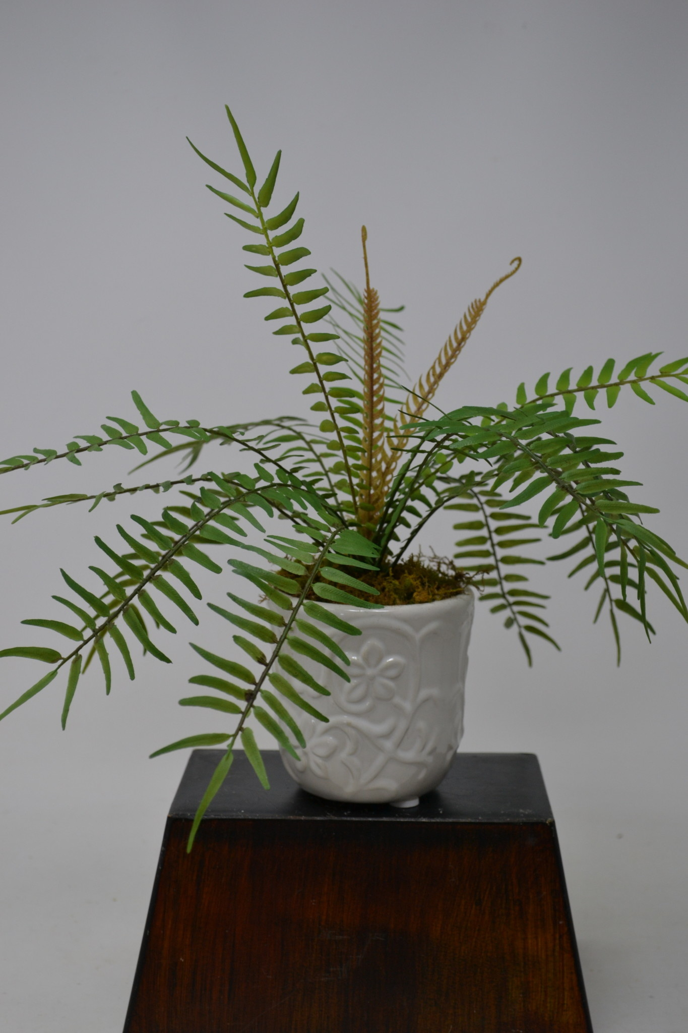 Custom Finger Fern in Daisy Container