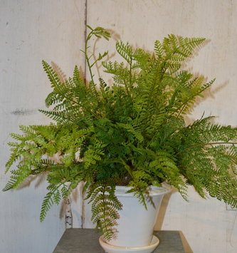 Custom Mixed Fern In White Ceramic Pot