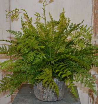 Custom Lace Fern In Woodland Tree Trunk Container
