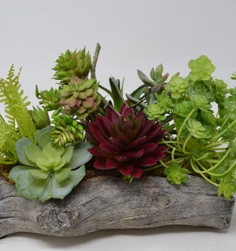 Custom Succulent In Driftwood Container