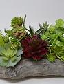 Custom Succulent In Driftwood Container
