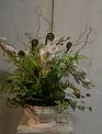 Custom Phalaenopsis Arrangement