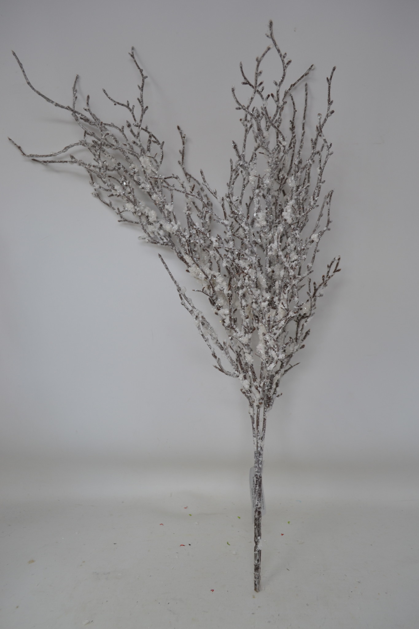 Iced Angel Pine Bush