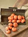 Mini Orange Speckled Pumpkins