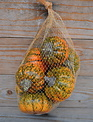 Bag of 8 Mixed Fall Pumpkins