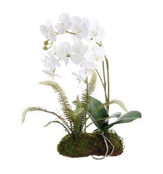 "21"" White Orchids with Fern on Moss"