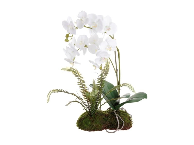 """21"""" White Orchids with Fern on Moss"""