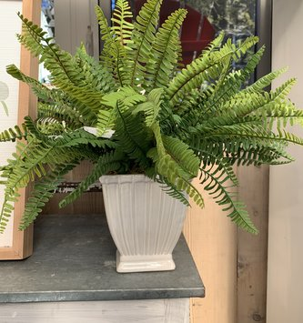Custom Swordfern In Cream Container