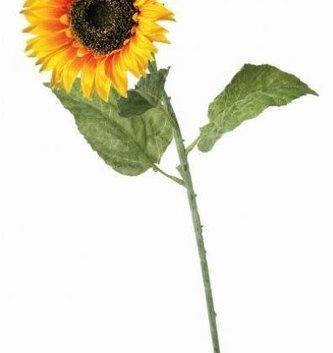 Vibrant Sunflower Stem