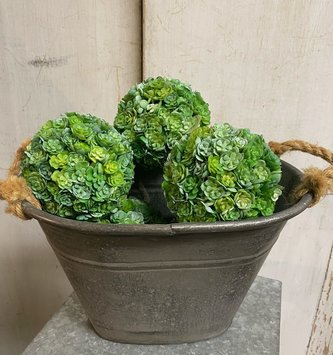 Green Chick Succulent Orb (2 Sizes)