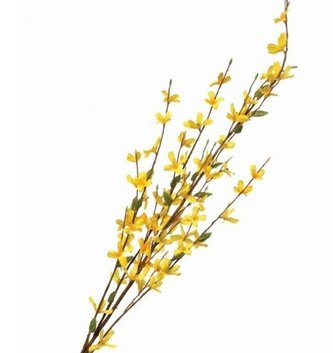 "36"" Forsythia Spray"