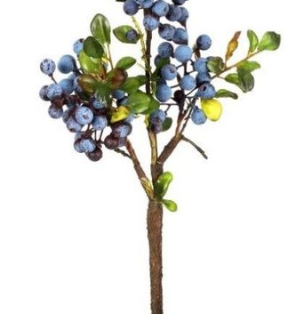 Blueberry Cluster Branch