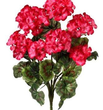 Pink Geranium Bush