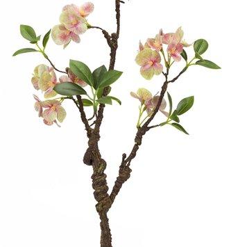 Blooming Hydrangea Branch