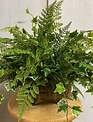 Custom Lace Fern & Ivy In Footed Oval Container