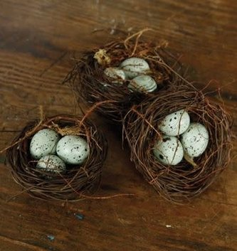 Blue Bird Nest