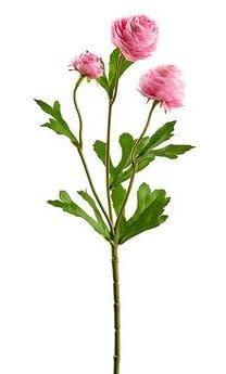 Mini Ranunculus Spray (5-Colors)