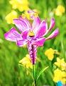 Flower Garden Wind Spinner Stake (2-Colors)