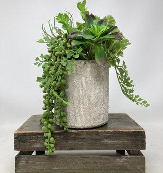Custom Succulent In Beaded Clay Pot