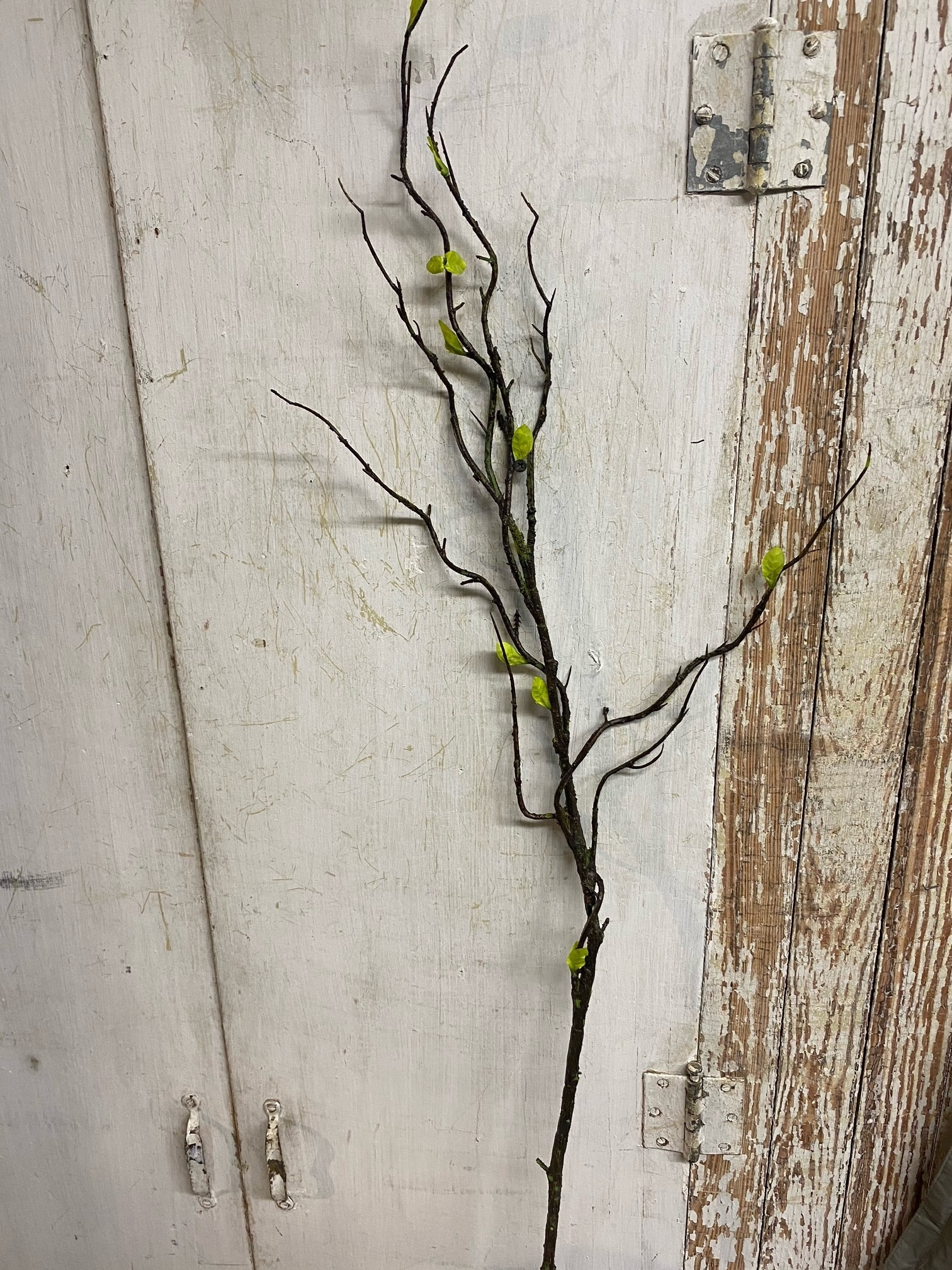 Curly Willow Stem w/ Leaves
