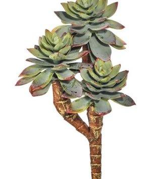 Triple Star Succulent Pick