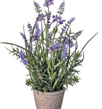 Garden Lavender in Cement Pot (2-styles)