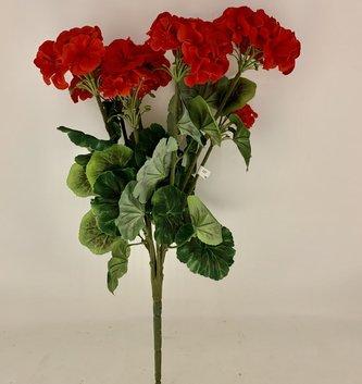 Red Garden Geranium