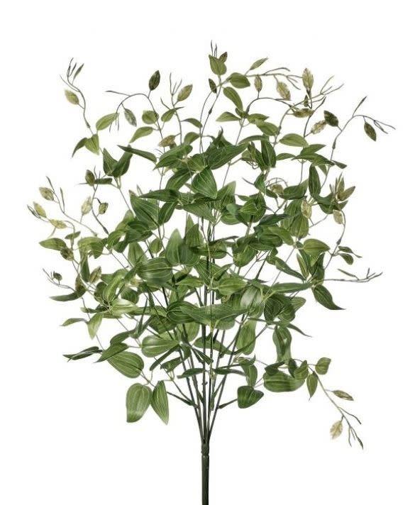 Tradescantia Greenery Bush