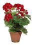 17'' Red Potted Geranium