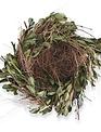 Boxwood Twig Nest
