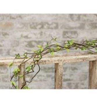 5' Twig Leaf Vine
