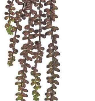 Beaded Trailing Succulent (2-colors)