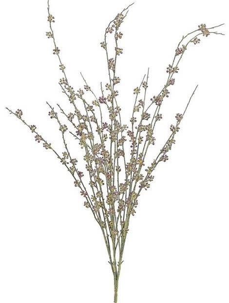Birch Seed Bush