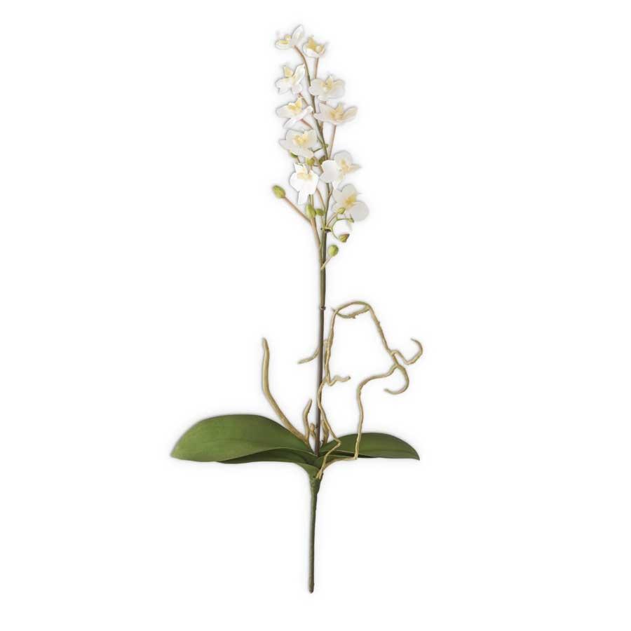 Mini White Orchid Plant