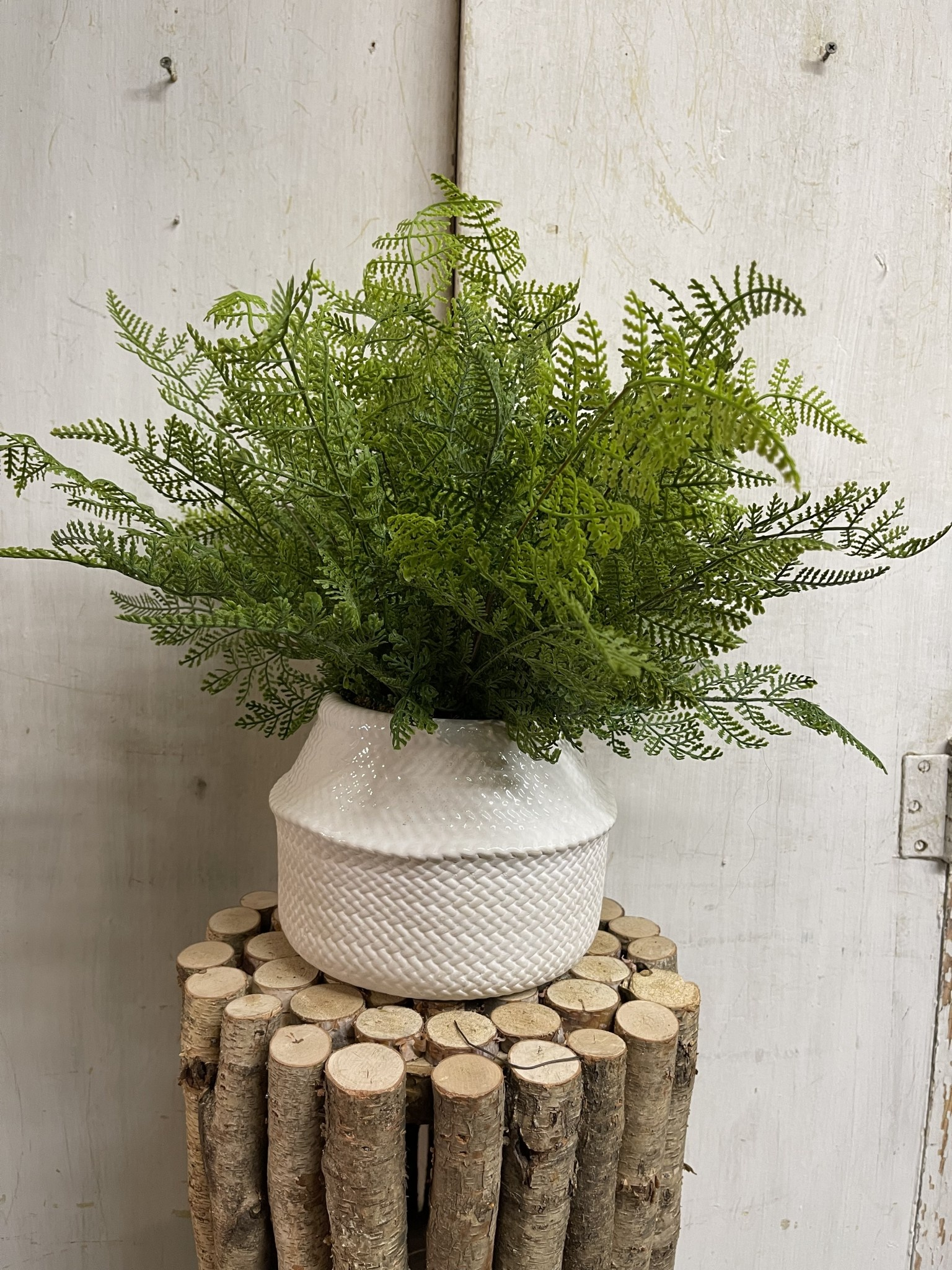Custom Lace Fern in Ceramic Wicker Textured Container