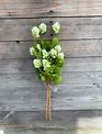 26.5'' Green Hops Spray