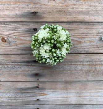 5'' White Kalanchoe Ball