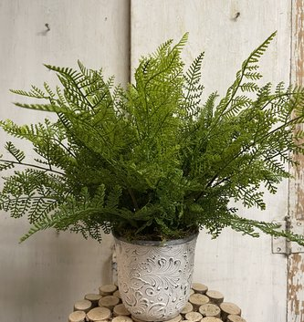 Custom Lace Fern In Graywashed Cement Floral Container