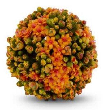 4'' Orange Kalanchoe Ball