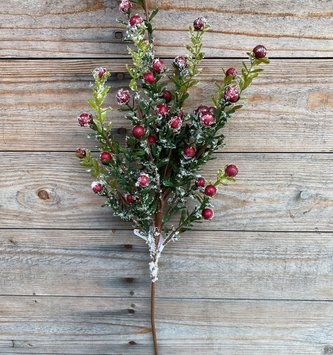 Snowy Boxwood Red Berry Spray